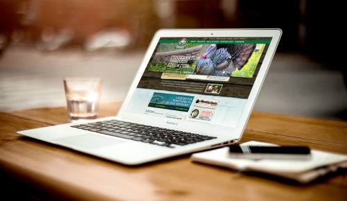 Looking for local web design in Hilton Head